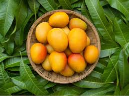 Fruit Tree Identification Chart 15 Yummy Indian Mango Varieties And How To Identify Them