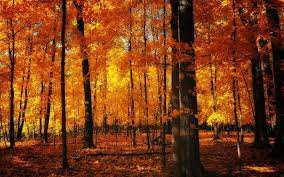 Forest Orange Wallpapers - Top Free ...
