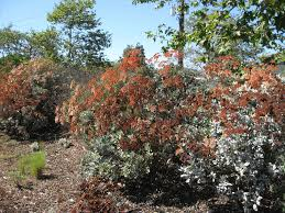 california native plants for the garden. For A Complete List Of Native Plants (appropriate Lower-elevation S. California) With Fall Flower, Seed And Fruit Color See: California The Garden
