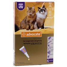 imidacloprid for cats. Perfect Cats Advocate Large Cat 48kg 918lbs 6 Pack With Imidacloprid For Cats T