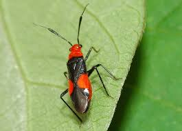 Image result for bugs on plants