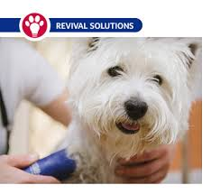 pet clipper and blade maintenance