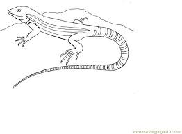 Small Picture Lizard Coloring Page Free Lizard Coloring Pages