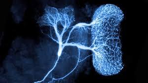 Introducción a la Neurocirugía | Unidad de Neurocirugía RGS
