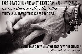 Animal Rights Quotes Awesome The Bible And The Animal Rights Movement Blog PETA Latino