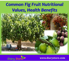 mon fig fruit mon fig fruit contains amazing nutrients