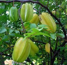 Jamaican Fruit And VegetablesJamaican Fruit Trees