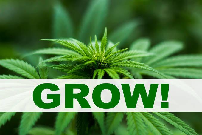 Prestiti immobiliari in California | Affari di marijuana e cannabis ...