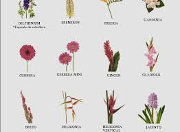 wedding flower names awesome 84 types flowers chart and list flower types flowers