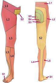 Feet Clipart Lower Limb Feet Lower Limb Transparent Free