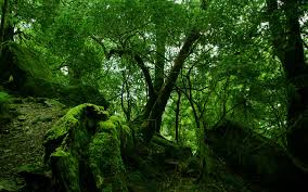 rainforest moss wallpaper other nature wallpapers