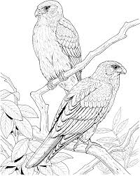 Bird Coloring Pages Realistic Coloringstar