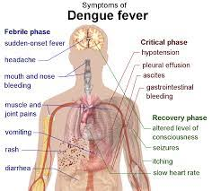 dengue fever treatment prevention is always better than cure   prevention is always better than cure