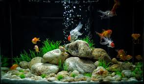 Cool Aquariums Images For Cool Goldfish Tank Ideas For The Kid Pinterest