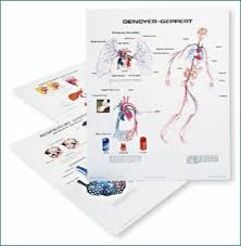Human Body System Chart Set Clinical Charts And Supplies