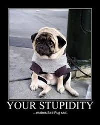 You Should Be Ashamed - Pug Meme, funny cute pugs via Relatably.com