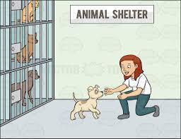 animal shelter clipart. Wonderful Shelter A Female Volunteer In An Animal Shelter For Animal Shelter Clipart I