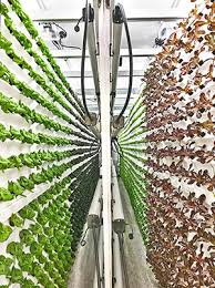 Freight Farms, Tiger Corner Farms]Container Farms: A New Type of  Agriculture - SmartFarm The30F