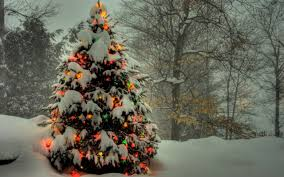 christmas trees decorated outside snow. Delighful Decorated Christmas Tree  Snow Wallpapers ID464603 To Trees Decorated Outside G