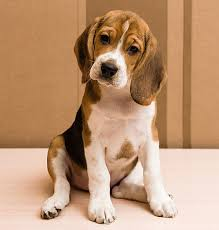 Image result for cute dog
