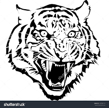 tiger black and white drawing. Fine White Throughout Tiger Black And White Drawing S