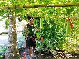 parish priest constructs a garden to