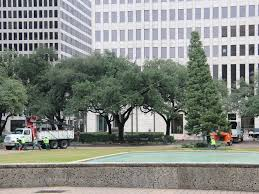 Houston City Hall, Christmas tree, recycling, December 2012