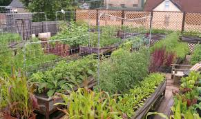 Kitchen Gardens In India Greenroof Benefits Tomato Clubs Nyc The Club Eco Plant Salad Nyc