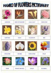 pictures of diffe flowers and their names roselawnlutheran