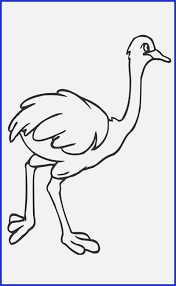 Coloring Pages Umbrella Bird Coloring Page Free Printable Ostrich