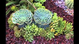 Small Picture Best Of Succulent Garden Design Plans Perfect