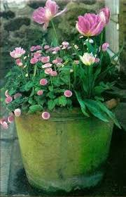Small Picture 1602 best container gardening images on Pinterest Pots