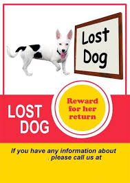Lost Dog Flyer Template Word Lost Dog Flyer Template Word Oloschurchtp 17