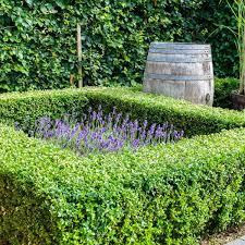 Strauch Und Heckenschnitt Im Raum M Nster Tripp Galabau Garten Strauch Baumpflege Sichtschutz