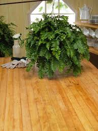 how to care for ferns indoor hanging plants direct sunlight n1