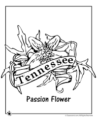 Small Picture State Flower Coloring Pages Tennessee State Flower Coloring Page