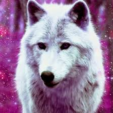 galaxy tumblr hipster wolf. Simple Wolf Photo To Galaxy Tumblr Hipster Wolf