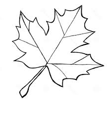 Small Picture Sugar Maple Leaf Sketch Maple Leaves Coloring Pages To use for