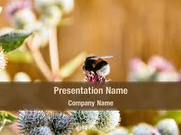 Flower Powerpoint Free Bee On Flower Powerpoint Template Backgrounds Bee On
