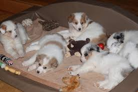 big dog furniture. puppies on waterproof kika comfort den big dog furniture