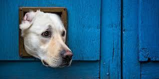 7 best dog doors for walls doors