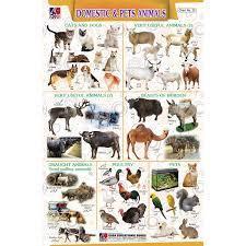 Chart No 20 Domestic And Pets Animals