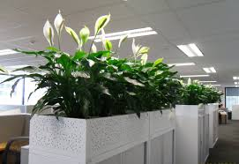 office cubicle plants. Office Plants Cubicle Solutions Interiors