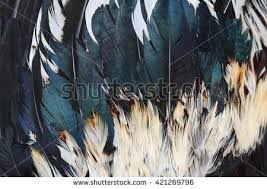 feather patterns free photos background pattern of black feathers black feather