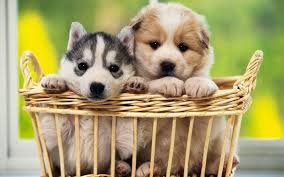 Puppy Cute Most Beautiful Dog Wallpaper ...