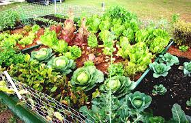 Small Picture vegetable gardening for dummies australia Container Gardening Ideas