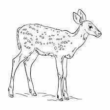 Herten Rendieren En Elanden Kleurplaten Leuk Voor Kids