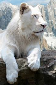 white lion iphone wallpaper. Contemporary Iphone Download Now On White Lion Iphone Wallpaper E