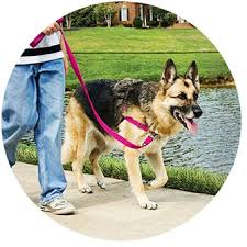 Petsafe Easy Walk Dog Harness Black Silver Petite