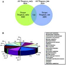 Venn Diagram Of Transcription And Translation Analysis Of Cdna Libraries From Developing Seeds Of Guar